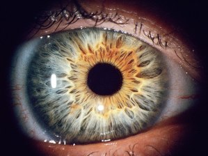 https://spectrum.ieee.org/the-human-os/biomedical/imaging/biometric-researcher-asks-is-that-eyeball-alive-or-dead